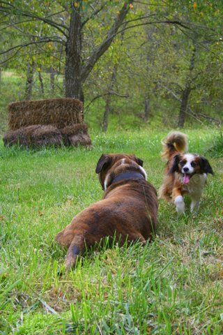 Chandler Backview and Lewie by Barbara Mourglia
