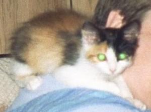 agatha kitten